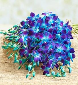 Ocean Breeze Orchids, 10-20 Stems - 20 Stems Bouquet Only