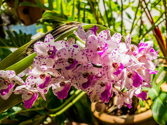 When Do Orchids Bloom Speceas And Hybrids